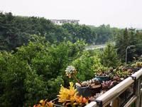 出售昌明怡景3室2厅2卫140.08平米75.8万住宅